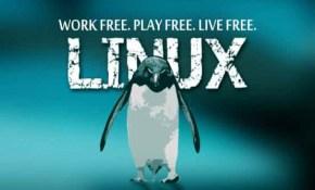 测试工程师linux技能全程实战-小强测试